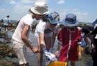 5/19(土)自然体験プログラム 「初夏の海で磯あそび」 4/24(火)10時~申込み受付開始