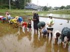 6/17(日) 自然体験プログラム 「どろんこ田植え体験」 実施しました!